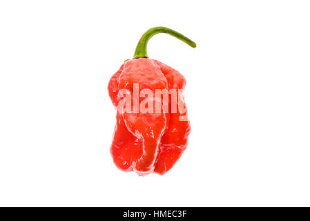 Fresh ripe Caribbean Red Habanero hot chili pepper with green stem.Isolated on white. - Stock Photo