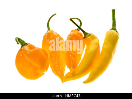 Different variety of yellow hot peppers - a bunch of chilies, isolated on white. Hot pepper Sarit Gat, Habanero - Stock Photo