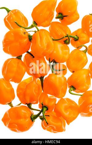 Bunch of Yellow orange ripe habanero hot chili peppers. Isolated on white. - Stock Photo