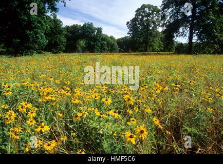 Wildflower field, Gus Engeling Wildlife Management Area, Texas. - Stock Photo