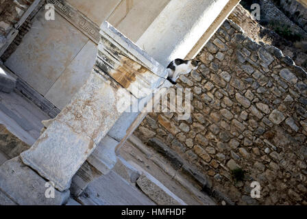 A small cat sits on a stone pillar at the ruins of Ephesus, Turkey. - Stock Photo