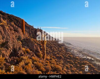 View of Incahuasi Island with its gigantic cacti, Salar de Uyuni, Daniel Campos Province, Potosi Department, Bolivia - Stock Photo