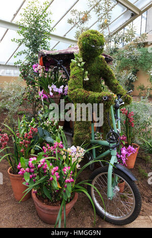 London, UK. 2 February 2017. Press preview of the Kew Gardens 2017 Orchids Festival which opens to the public on - Stock Photo