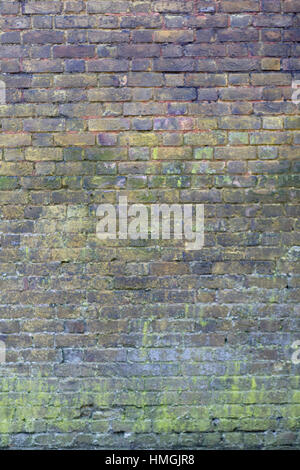 Brick wall covered in Moss - Stock Photo