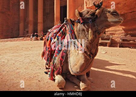 Camel infront of The Khazne al-Firaun, Chaznat al-Firaun, Al-Khazneh, treasure house of the Pharaoh, a mausoleum - Stock Photo