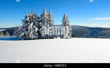 Winter landscape at Fichtelberg, spruces covered in snow, Ore Mountains, Saxony, Germany - Stock Photo