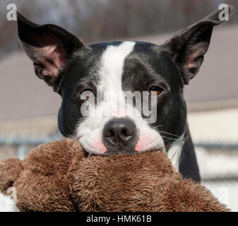 Shelter Dog Is A Beautiful Dog In An Animal Shelter Looking Through