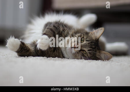 cat with green eyes lying on the carpet - Stock Photo