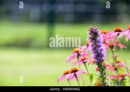 Rose and purple colored meadow flowers in front of green bokeh - details - Stock Photo