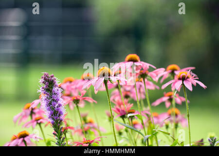 Rose and purple colored meadow flowers in front of green bokeh - Stock Photo