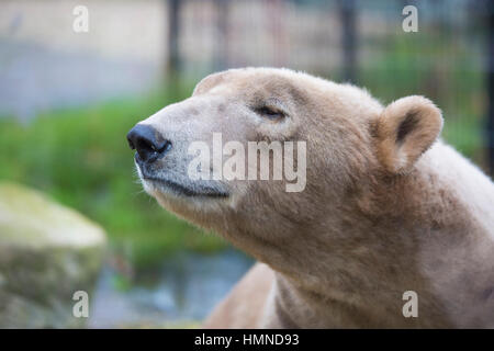 sleepy bear - Stock Photo