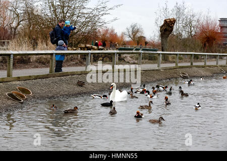 Slimbridge Wildfowl and Wetlands Centre, Gloucestershire, United Kingdom - Stock Photo