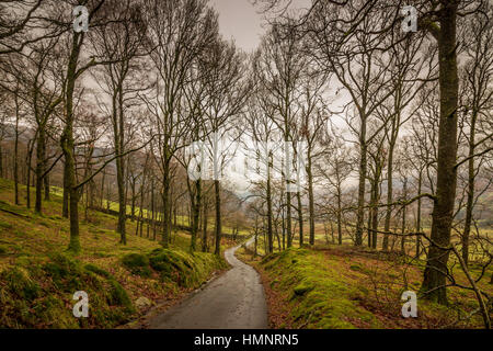 Footpath through the woods in the Langdale Valley, heading towards Oak Howe on a cloudy and gloomy winter afternoon - Stock Photo