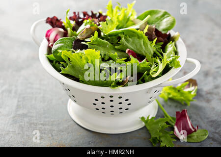 Fresh green spring mix salad leaves in a collander - Stock Photo