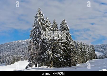 Winter landscape with snow-covered coniferous trees in the Swiss Jura mountain range near Saint-Cergue, Vaud, Switzerland - Stock Photo