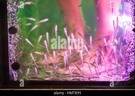 Fish massage bangkok thailand stock photo royalty free for Fish foot massage