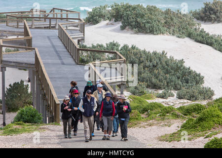 Tour guide leads visitors to see the seals at Seal Bay on Kangaroo island,South Australia - Stock Photo