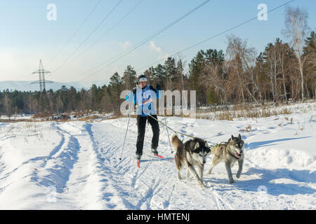 Irkutsk, Russia - January 28, 2017: Racing competition for dog sledding and skijoring Angara beads 2017. - Stock Photo