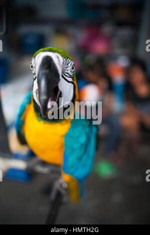 Market Bird Stall Chatuchak Market Bangkok Thailand Stock
