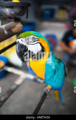 Market Bird Stall Chatuchak Market Bangkok Thailand Stock Photo