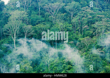 Rain Forest with fog, Corcovado National Park, Costa Rica - Stock Photo