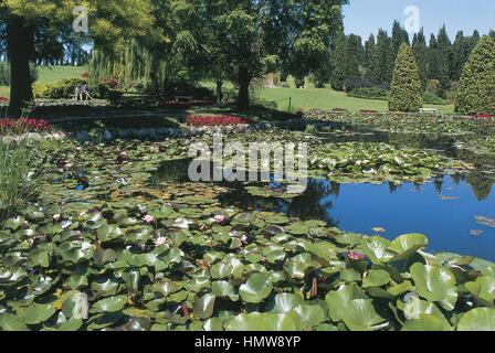 Italy - Veneto Region - Botany - Garden Park Sigurta of Valeggio sul Mincio (Verona province). Gardens with nymphaeas - Stock Photo