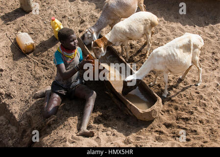 ETHIOPIA, Southern Nations, Lower Omo valley, Kangaten, village Kakuta, Nyangatom tribe, shepherd give water for - Stock Photo