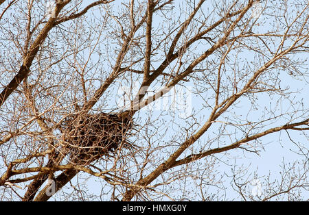 Rock Island, Iowa, USA. 19th Dec, 2016. An eagles nest on the Rock River in Rock Island Monday, December 19, 2016. - Stock Photo