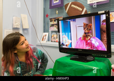 Wantagh, New York, USA. February 5, 2017. SUZANNE FERRARA, 10, of Plainview, watches kitten playing in pink Hamster - Stock Photo