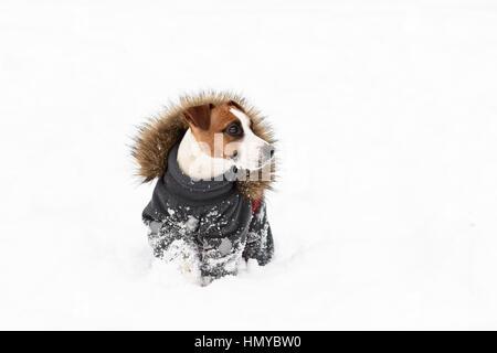 Winter doggy fashion: dog wearing apparel with fur collar - Stock Photo
