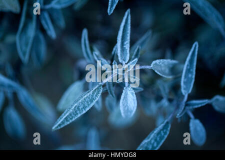 Mid winter with frost cristales on the leaves - Stock Photo