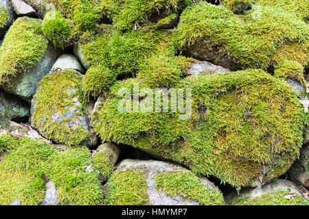 Detail of a moss-grown stone wall fence - Stock Photo