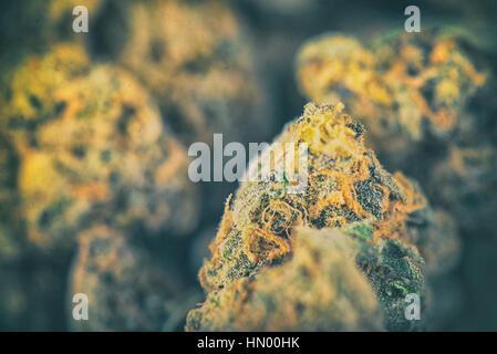 Macro detail of dried cannabis buds - medical marijuana concept background - Stock Photo
