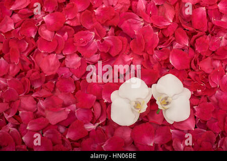 Lot of rose petals and two orchids - Stock Photo