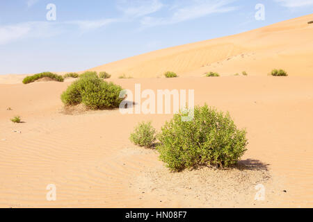 Beautiful sand dune formations in the Liwa Oasis. Emirate of Abu Dhabi, United Arab Emirates - Stock Photo