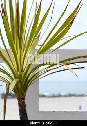 on the beach in Coronado California - Stock Photo