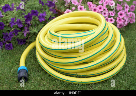 ... Garden; Plastic Hose Pipe In Front Pink Flowers On A Grass   Stock Photo