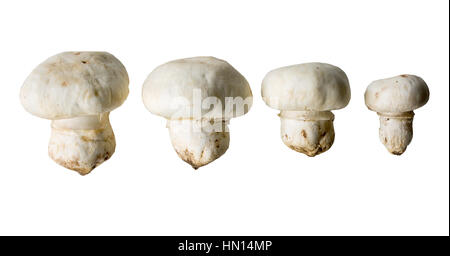 champignon mushrooms isolated on a white background, used in cooking for cooking - Stock Photo