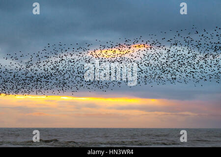 Blackpool, Lancashire, UK. 7th February 2017. UK Weather: Sunset & Starlings over the Irish Sea and North Pier. - Stock Photo