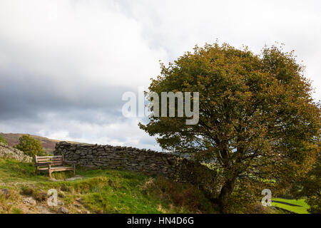 A wooden bench beneath a tree on the hills above Windermere in the Lake District - Stock Photo