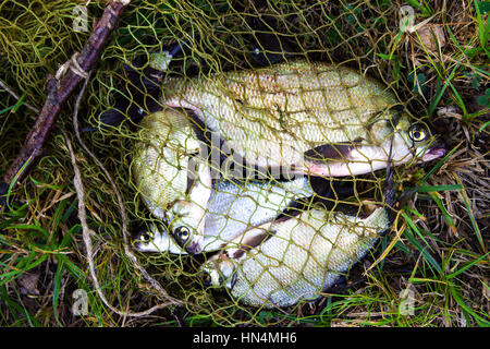 Fish the bream, a catch, on a hook fish - Stock Photo