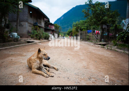 Dogs on the streets of Muang Ngoy, Laos - Stock Photo