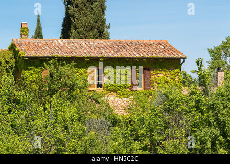 Italian cottage overgrown with ivy - Stock Photo