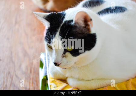 Cat up for adoption - Stock Photo