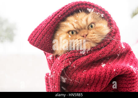 Stoppp snowing!!! - Stock Photo
