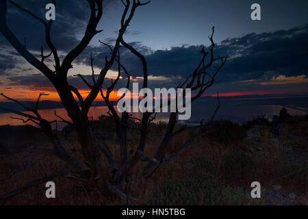 Branch in front of sunset at Stansbury Island, Tooele, Utah, USA - Stock Photo