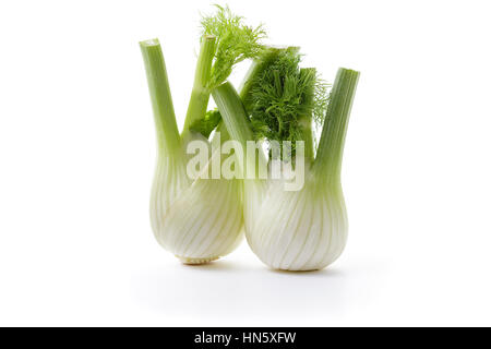 Fennel Blub.Two fresh fennel bulbs with leaves on white background. - Stock Photo