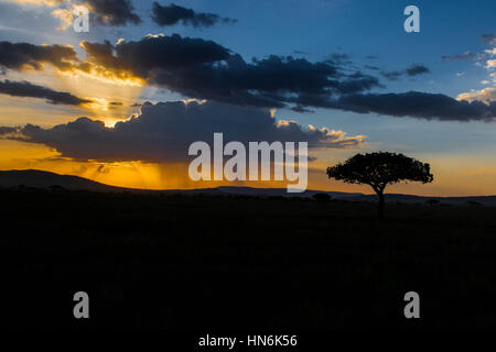 SERENGETI Tree Silhouette with African Sunset in Serengeti National Park, Tanzania, Africa - Stock Photo