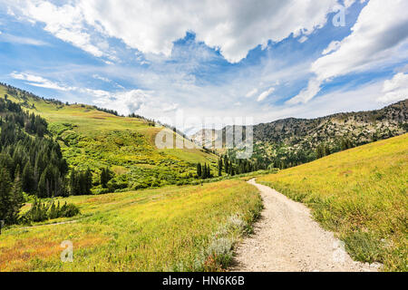 Albion Basin landscape scenery with alpine meadows photographed during summer. - Stock Photo