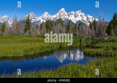 Schwabacher Landing near Mt Moran, Grand Teton National Park, Jackson, Wyoming, USA - Stock Photo